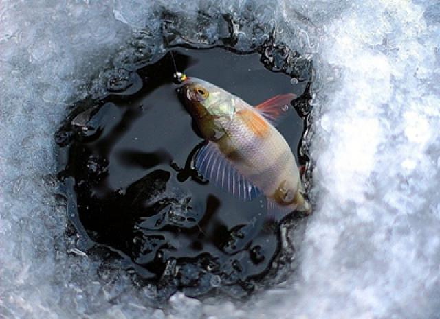 какая рыба ловится сейчас в волгограде