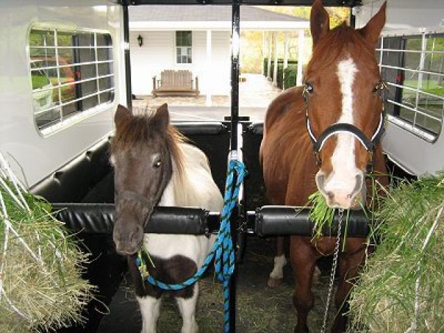 можно ли кормить лошадей капустой