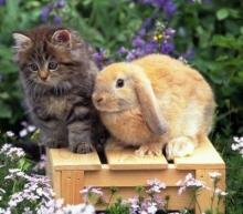 Челнинка сдает кроликов для детских игр