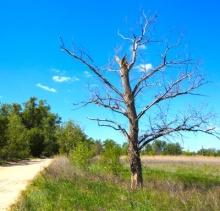 Сохнут деревья