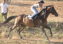Финал конных соревнований в Набережных Челнах