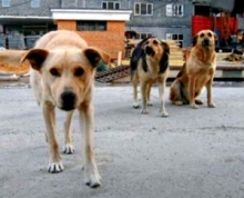 На жительницу дома 3-01 напали собаки