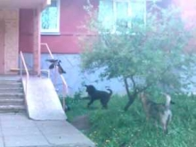 Собаки - хозяева улиц
