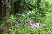 Сколько стоит уборка леса