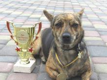 В Набережных Челнах пройдет выставка беспородных собак «Кубок Барбоса»
