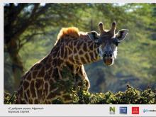 В Набережных Челнах открывается фотовыставка «Природа смотрит на тебя»