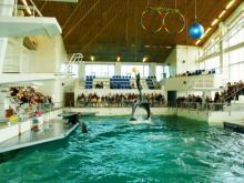 В соцсетях выложили клевету на работников дельфинария