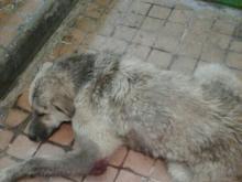 Собаку выкинули из окна дома в 46-м комплексе. Версии участкового и местных жителей расходятся...