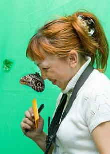 В Набережные Челны прилетели... бабочки