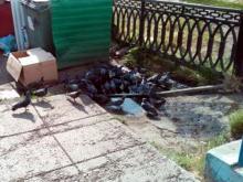 Салон сотовой связи на Набережночелнинском проспекте сливал отходы прямо на улицу
