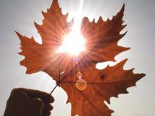 'Народный прогноз погоды': Осень проживем без отопления