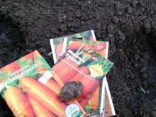 Бесплатные семена для садоводов: Татпотребсоюз ждет решения челнинского горисполкома