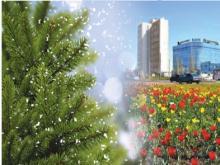 Выброшенные новогодние елки прорастут цветами