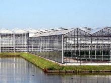'Татпроф' будет развивать производство российских тепличных комплексов