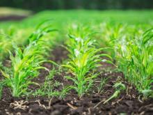 Специалисты КФУ помогут агрохолдингу из Татарстана освоить технологии точного земледелия