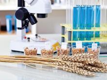 «Челны–Хлеб» завез пшеницу из карантинной зоны без нужной бумаги. Но пшеница оказалась нормальной