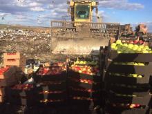 В Челнах уничтожили 910 килограммов польских яблок и груш, изъятых на рынке «Караван»