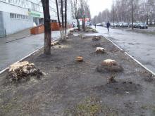 Вдоль Московского проспекта вырубают деревья, расчищая место для парковки