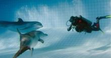 Дайвинг в Челнах среди дельфинов