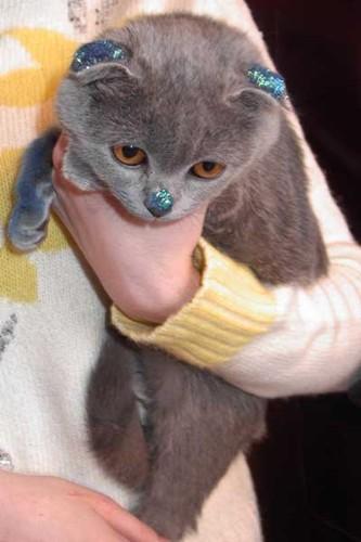 картинки для телефона гламурные котики